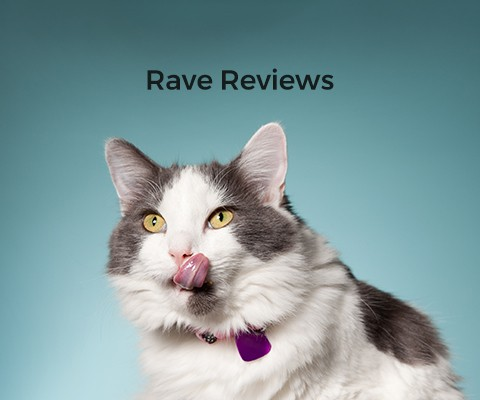 Rave Reviews